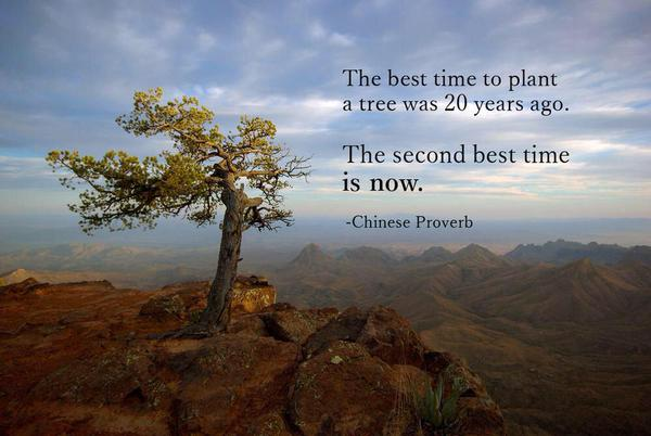 the-best-time-to-plant-a-tree-was-20-years-ago-the-second-best-time-is-now